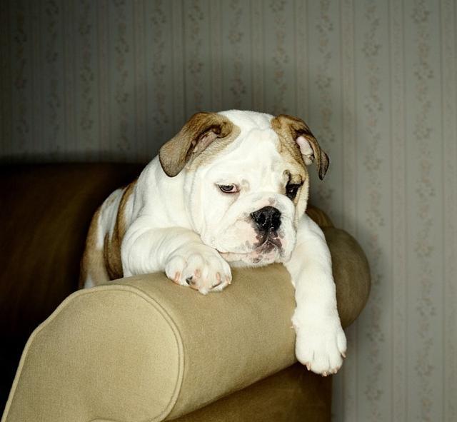10个令狗狗不高兴的行为摸脸、喷香水都有错?