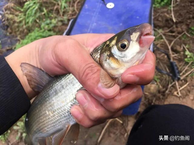 钓鲴鱼用什么钩最好