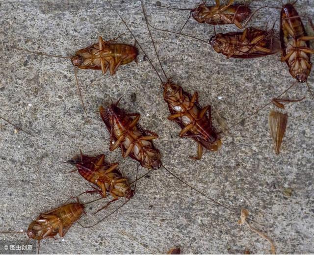 家里蟑螂泛滥了,买过蟑螂屋和胶饵感觉效果都不太好,有什么办法可以彻底消灭小强