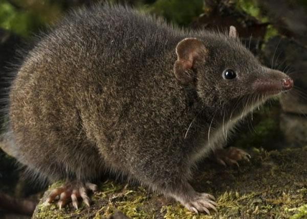 繁殖能力最强的哺乳动物是什么动物