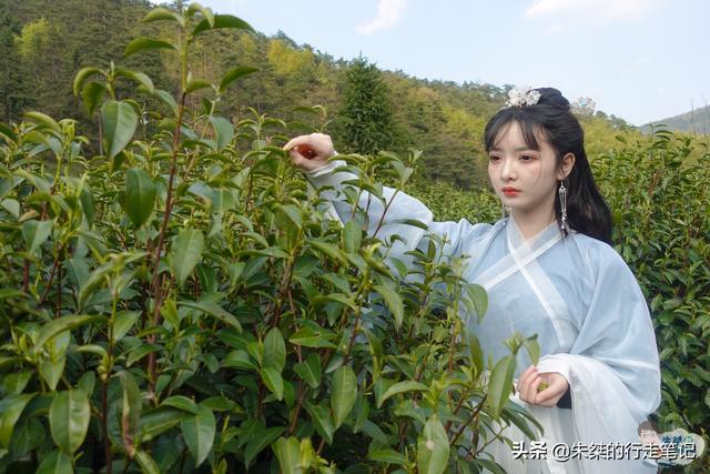 四大名茶之一的龙井茶产地是哪里?