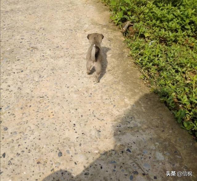 小狗3个月能长多大
