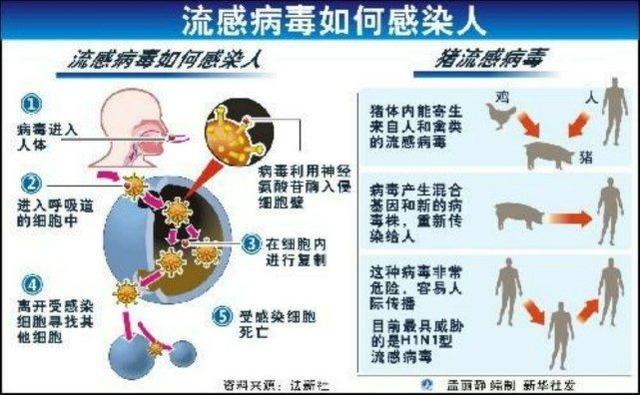 """中国研究者发现了一种具有""""全球大流行潜力""""的新型猪流感病毒"""