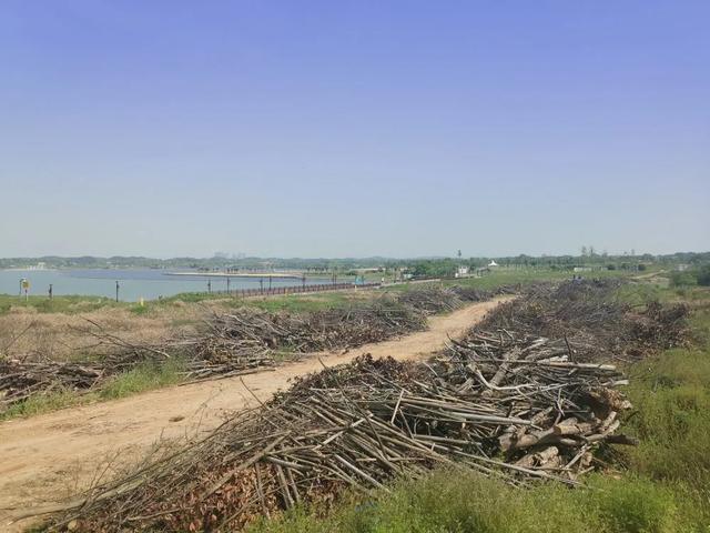 中能装备QTG300施工案例——松雅湖国家湿地公园园林废弃物粉碎