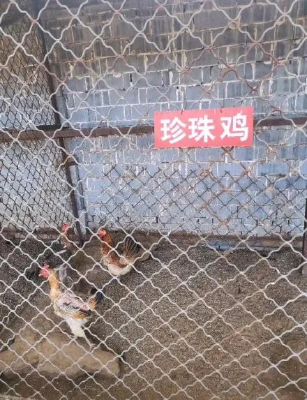 动物园门票才两元,以为赚到了,没想到我见识了最敷衍的动物园