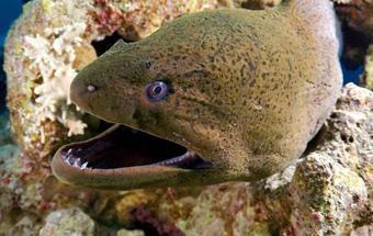 盘点海洋中十大危险动物,遇到要绕道走