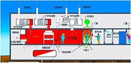 实验室,四大模式生物,指的是哪些
