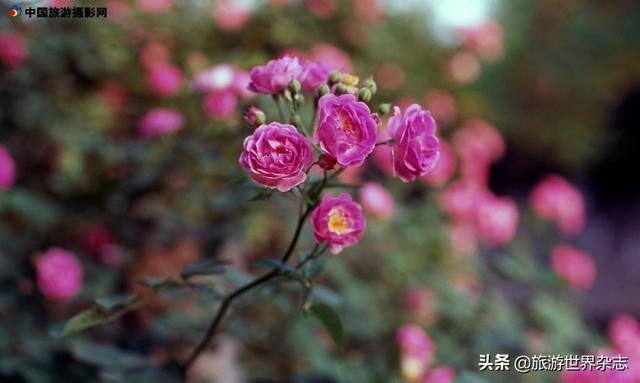 六月|一组富士反转片拍的春花