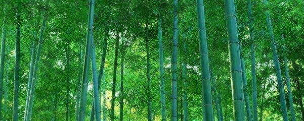 毛竹在家种什么地方好