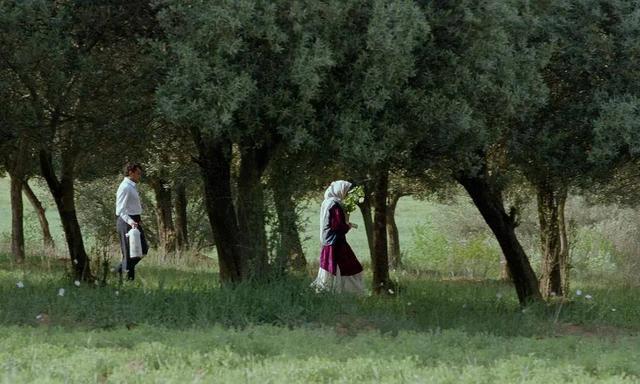 乱小说录目伦200篇豆瓣8.4《橄榄树下的情人》:一种爱情,两种坚守,诠释爱的真谛