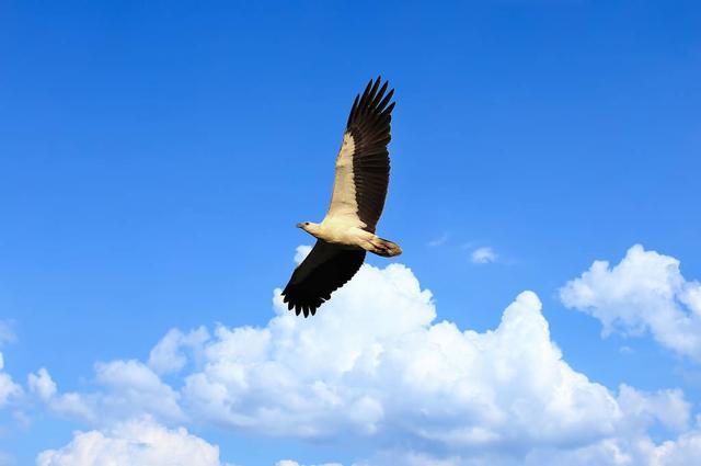 穿越天空的心灵读后感作文100字