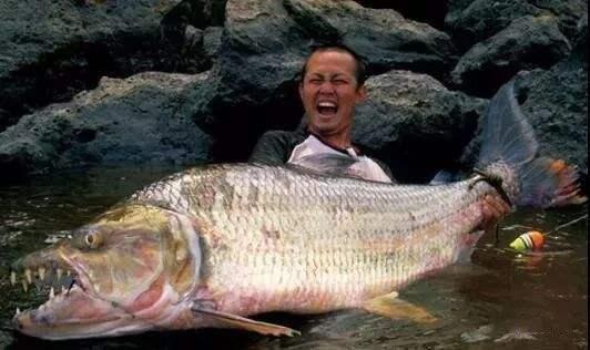 世界上10大凶猛的淡水鱼,你见过几种?