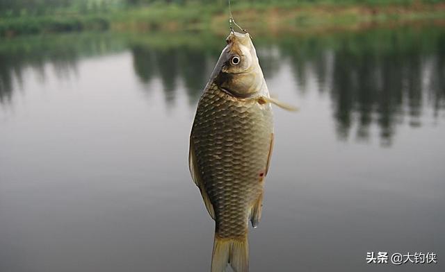 如何用面粉钓鱼