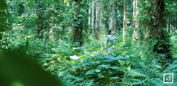 国货宝藏三草两木,坚持自然生态,包揽国内各项大奖,口碑炸裂