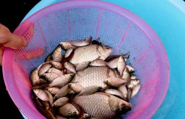 钓鱼用剩下的饵料都是如何处理的?