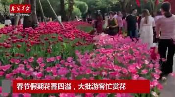 南宁哪里公园有樱花