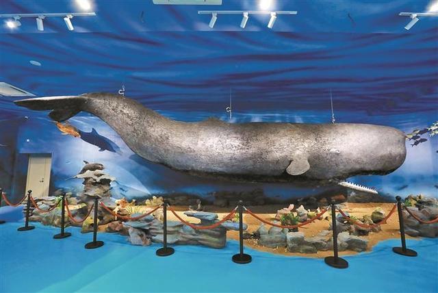 """还记得那只在大亚湾搁浅死亡的抹香鲸吗?它""""重生""""了"""