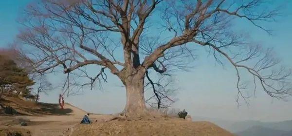 韩剧《双甲路边摊》,不仅是鬼怪版《深夜食堂》