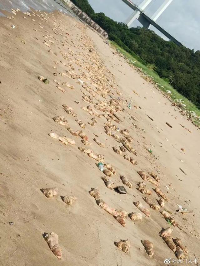 震惊!东莞海滩惊现大量猪蹄,或超过20吨,公安等多部门已介入调查
