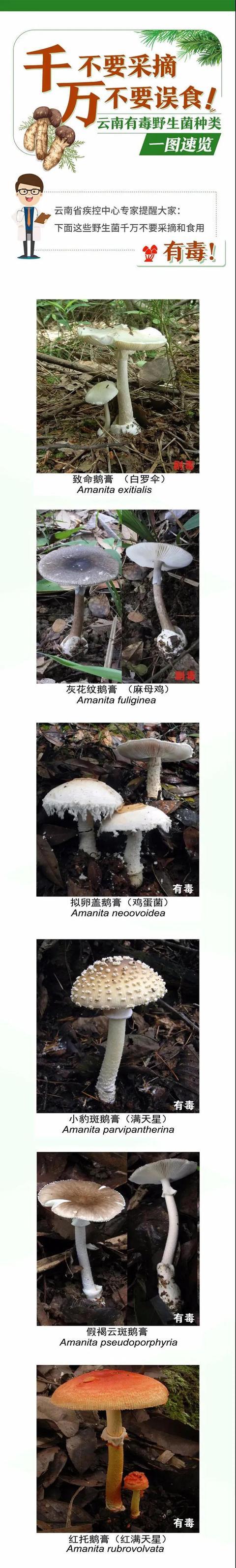 云南今年发生野生菌中毒事件273起致12死,这份吃菌手册请收好