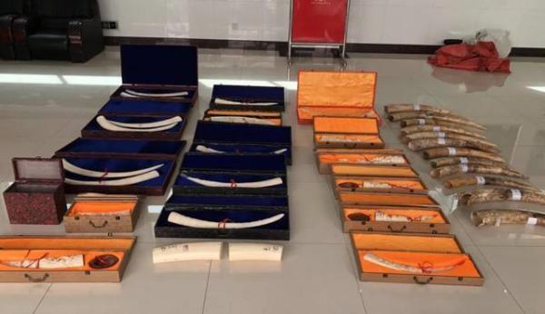 涉案3.4亿元、8.23吨象牙,15人被刑拘……福建特大走私象牙案宣判