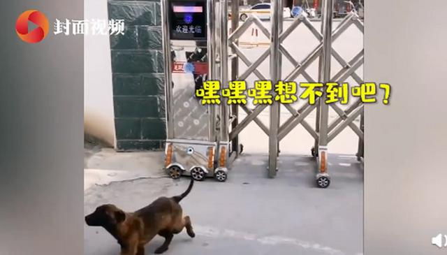 """来了就不走了!流浪犬""""巴万""""凭实力成为警犬学员,将被培养成搜爆犬"""