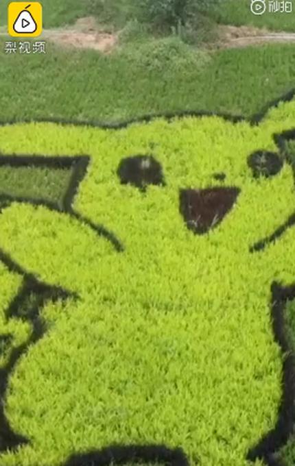 村民用5色水稻种出稻田画!成功打造出特色的稻田公园 拉动周边消费