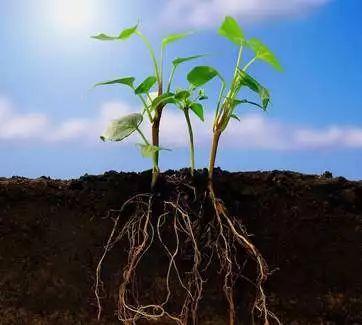土壤是什么的混合物