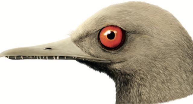 """""""恐龙猎人""""邢立达:收获琥珀、论文和争议"""