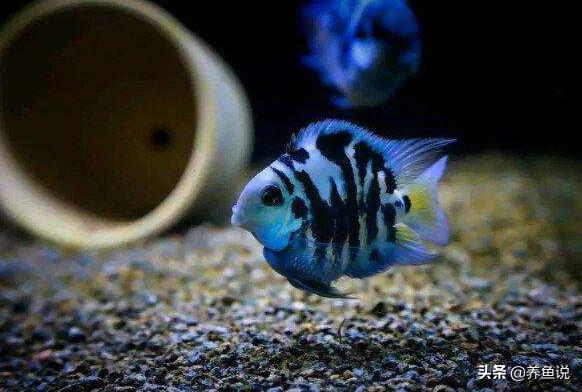 繁殖快的鱼有哪些