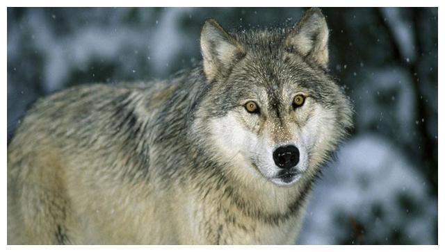 与狼狈为奸意思相近的成语是
