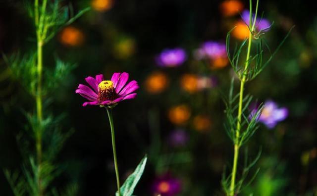 杜鹃花 山茶花和映山红是同一种花吗?