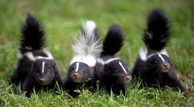 """这5种""""别样""""的宠物,敢养的人都很勇敢"""