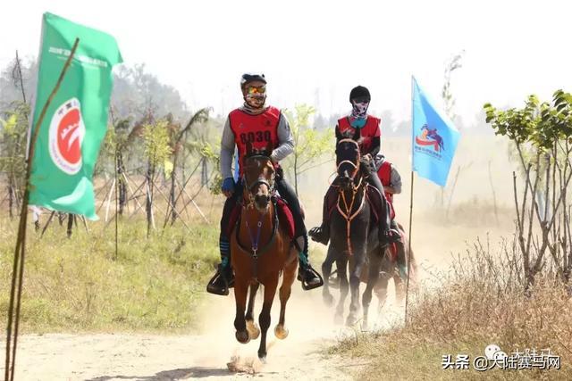 从江苏坐车到内蒙古赤峰,返程买头马边骑边玩,一头公马需要多少钱?需哪些准备?