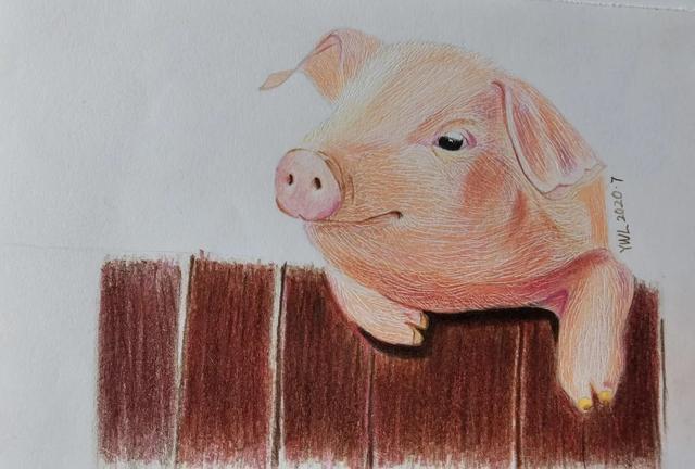 彩铅丨萌萌哒粉色小猪,精致的猪猪女孩都该学一下