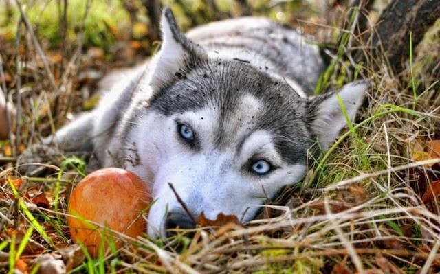 关于狗狗有哪些喂养的小知识