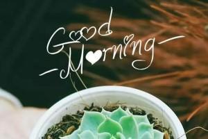 早安心语正能量2019:从今天开始努力,带着微笑开始新的一天