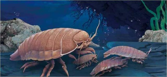深海中长相怪异的五大生物,你可能都没见过