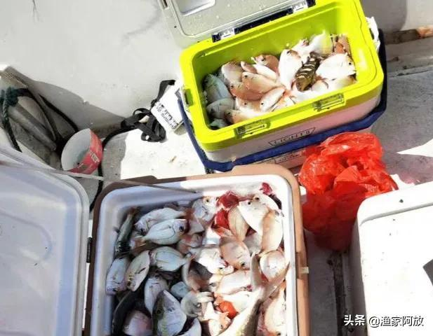 海岸钓鱼用什么饵料