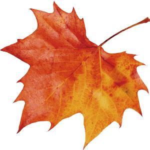 苗写秋天景色的词语有哪些