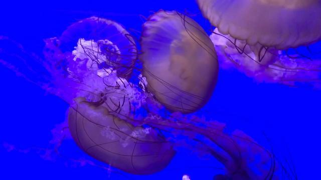 青岛海底世界作文500字第3篇图片