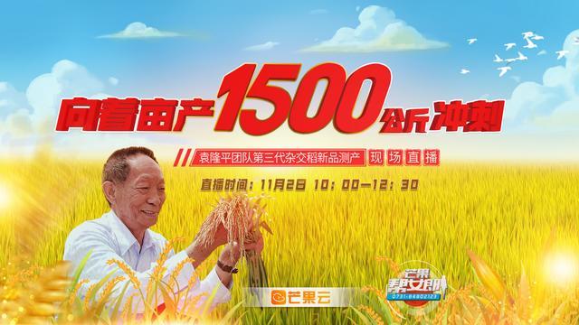 水稻如何测产