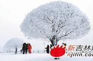 松花江畔现今冬最大规模一次雾凇 美得毫无吝啬