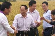 袁隆平选育的华南双季超级稻亩产创世界纪录