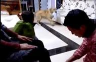 狗狗看到主人给母亲洗脚,主动帮忙!