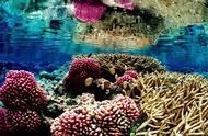 珊瑚也能3D打印,这样拯救海洋生态真的靠谱么?