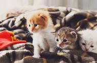 猫咪竟然会说神秘语言?十个关于猫的冷知识