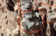 这下好玩了!较著名科学家声称,在火星上发现了活的昆虫