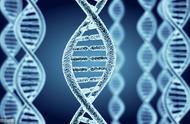 老鼠基因和人类有90%相似,为什么长得和人类差距这么大?