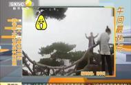 太危险!游客爬上黄山悬崖松树拍照 路人:不要命的操作